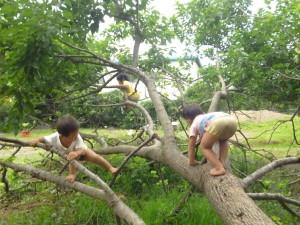 2歳児も桑の木登り