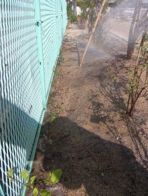 長いフェンスはすべて緑へ変化する