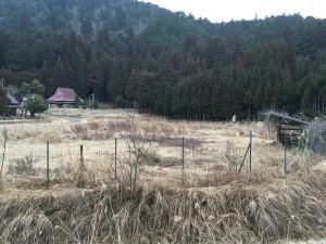 畑と物置小屋。研究所は中央杉木立の中。少しの時間を見つけては、この広い畑にいた。