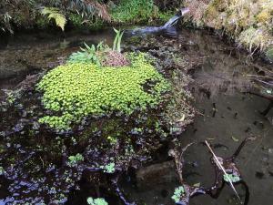 山の湧水を集めた池。