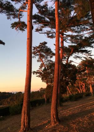 静岡県立森林公園の朝日
